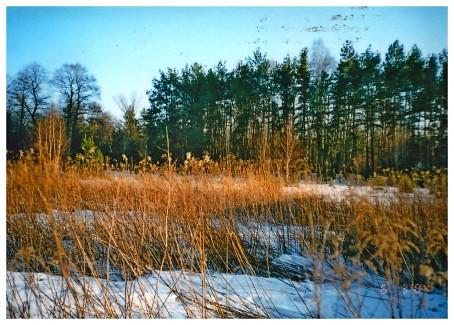 Widok działki w 2004 roku.